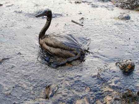 contaminacion por petroleo